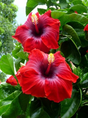 flowers in Santa Catarina