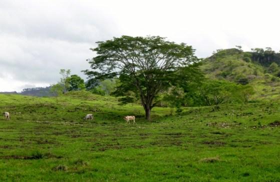 countryside - Copan,Honduras