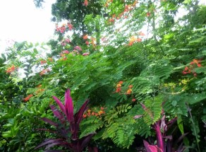 Flowers in the forest - Utila