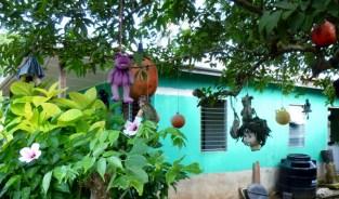 Tree of dead dolls - Big Corn Island,Nicaragua