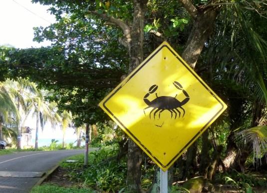 Crab crossing - Big Corn Island,Nicaragua