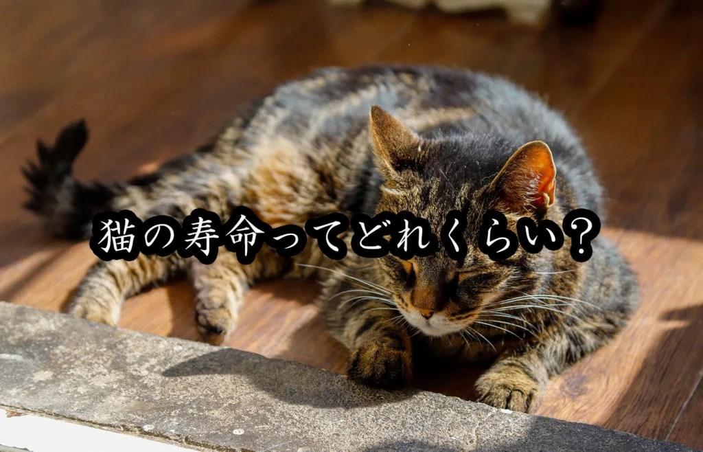 猫の平均寿命って?品種別寿命ランキングやギネス記録、寿命を延ばす方法もご紹介