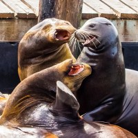 The government as sea lions
