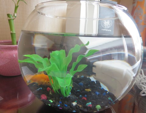 The poor goldfish in 532 has no name