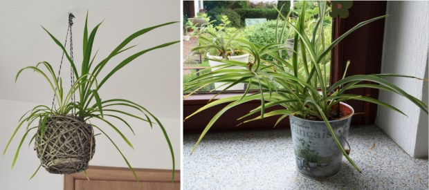 Zimmerpflanzen züchten