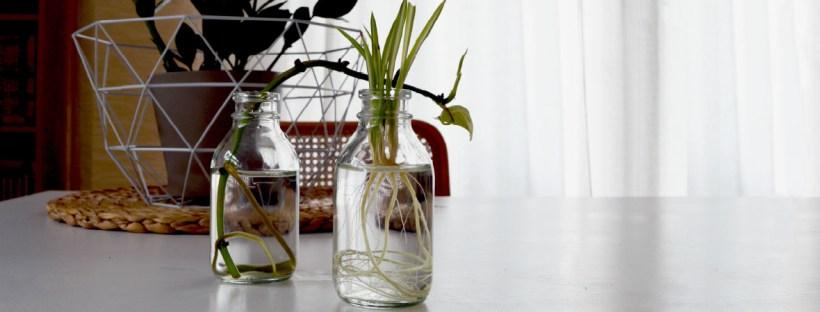 Zimmerpflanzen einfach vermehren