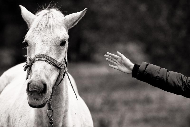 Sf.Ioșenia Sa - Fotografii cu cai