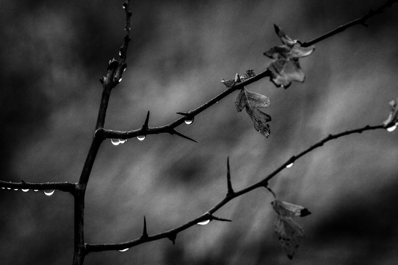 Zi de toamna - Autumn day