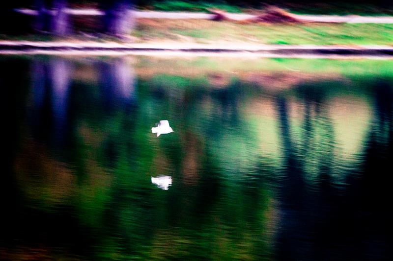 Pasari inghetate - Frozen Birds