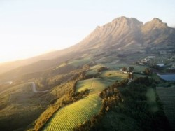Stellenbosch South Africa Vineyards
