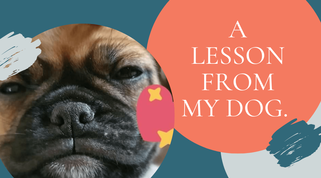 A lesson from my dog.  (Trigger warning – some parts readers may find distressing)