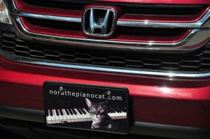 Nora The Piano Cat License Plate