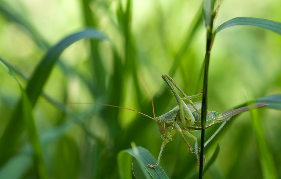 insect-212943_1920