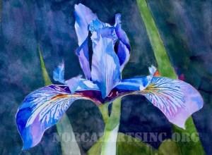 Iris by Robert Dvorak