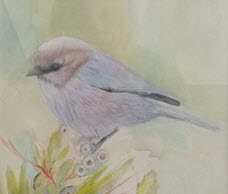 """Bushtit"" detail, by Sandra Mele, transparent watercolor"
