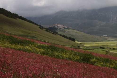 Piangrande e Castelluccio di Norcia durante la fioritura