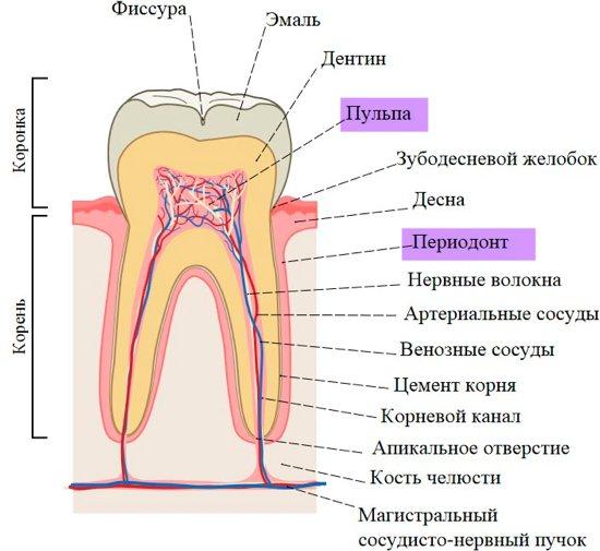 что может боль у зуба - пульпит и периодонтит - w550