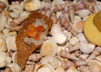 fingerfood-stellati-magorabin
