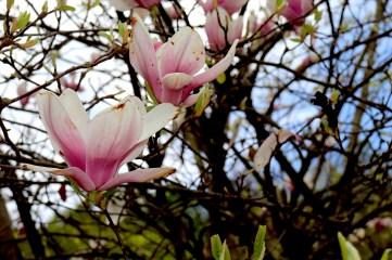 foto-di-fiori