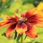 Die Gartenrowdys: Sonnenbraut