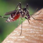 Mückenstiche: Was bei Kindern hilft