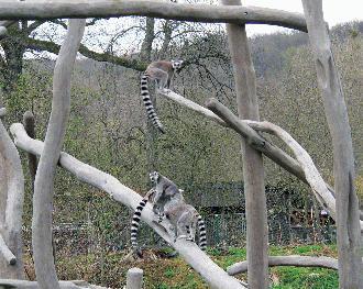 Tierpark Sababurg Kattas
