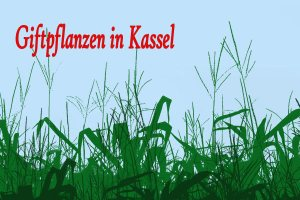 Giftpflanzen-in-Kassel
