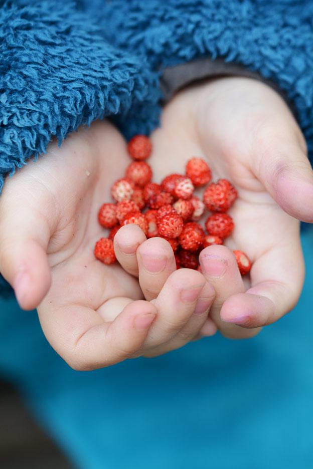 Markjordbær i hånda