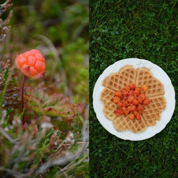 Cloudberries and waffles