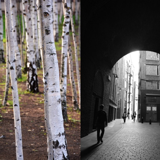 Birch wood at Tate Modern and Clink Prison Museum