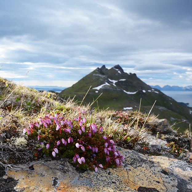Drangen, the tallest mountain at Rolløya