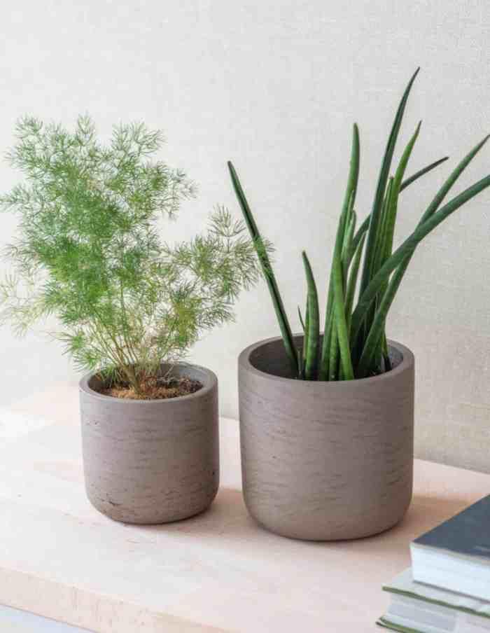 Warm Stone Set of 2 Plant Pots, Concrete