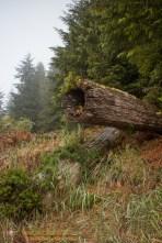 Lodge Remains