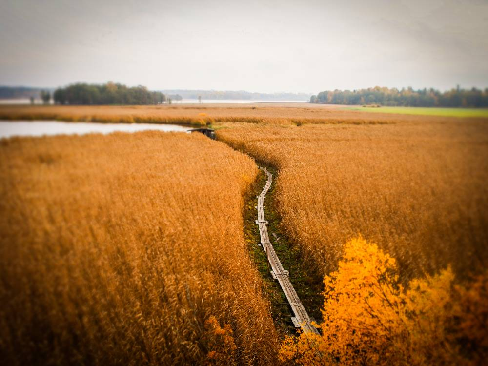 Helsinki: Lammassaari - Ein Hauch von Wildnis in der Stadt