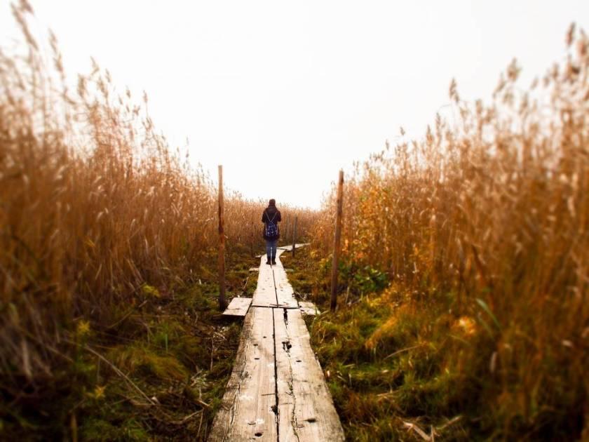 Der Naturpfad schlängelt sich über Holzplanken durch das Sumpfgebiet