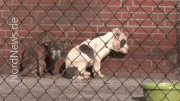 Neues vom Horror - Tierschutzhof - die Bürokratie geht weiter - Foto: NordNews.de