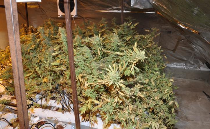Niederlangen (ots) -Beamte des Zentralen Kriminaldienstes aus Lingen haben am Montag gemeinsam mit Kollegen der niederländischen Polizei eine Indoor-Marihuanaplantage in einem Wohnhaus in Niederlangen ausgehoben. Foto: Presseportal.de