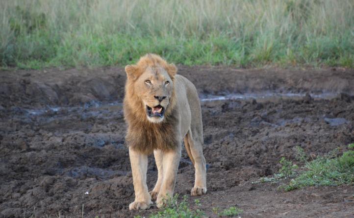 Südafrika – von Kapstadt bis zum Krüger Nationalpark - Multivisionsvortrag am 23. Oktober im Professorenhaus Foto: Ulrich Brinker