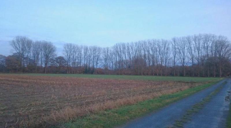 Gehölzfällungen in Hoogstede und Uelsen - Das Foto zeigt die betroffene Pappelreihe in Hoogstede. Foto: Landkreis Grafschaft bentheim
