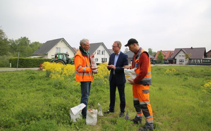 Wildpflanzensamen aus der Region kommt auf der Blühwiese an der Kirchstraße zum Einsatz. So können u.a. Lupinen oder Färberwaid gedeihen. Foto: Stadt Haren