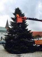 Stattliche Adventsbäume, wie hier auf dem Martinusplatz, sind nicht mehr leicht zu finden. Foto: Stadt Haren