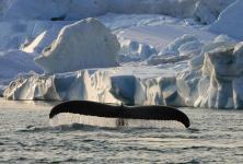 Beeindruckende Bilder aus den Polarregionen und zum Klimawandel präsentiert Sven Achtermann bei seinen Vorträgen (Foto: Sven Achtermann)