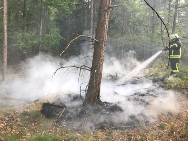 30 Quadratmeter Unterholz brennen mit im Wald – Feuerwehr Dörpen verhindert ein rasches Ausbreiten- - Foto: SG Dörpen / Feuerwehr