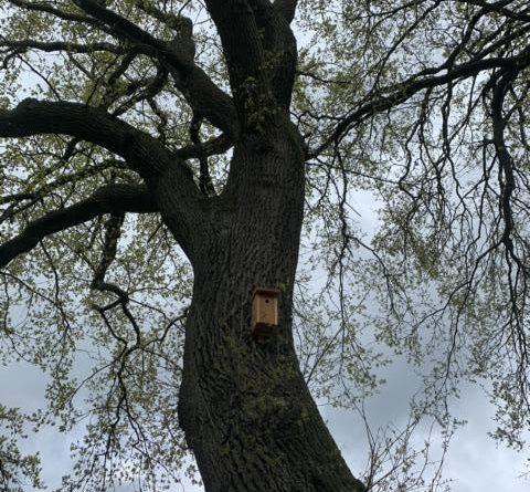 Werlte setzt Nist- und Fledermauskästen gegen Eichenprozessionsspinner ein - Foto: Stadt Werlte