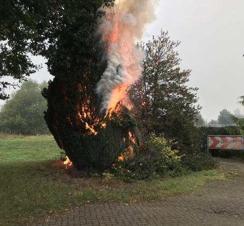 Neun Meter hoher Lebensbaum brennt in Neuenhaus - Foto: Feuerwehr Neuenhaus