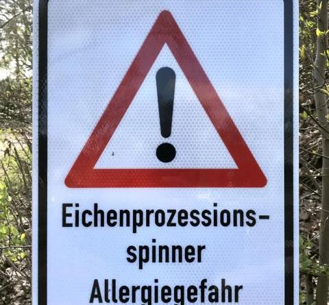 Eichenprozessionsspinner: Absaugen bisher beste Möglichkeit der Bekämpfung - Foto: Landkreis Grafschaft Bentheim