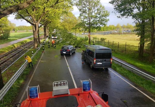 Einsatzstelle B 403. Der Ast ging direkt vor dem Tiguan nieder.Foto: Feuerwehr Neuenhaus