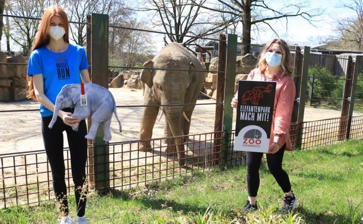 """Nina Ottoweß (links) freut sich über die Siegerehrung zum """"Rüssel-Run"""". Mit 44:40 Minuten für 10 Kilometer, war sie die schnellste Läuferin beim virtuellen """"Zoo-Lauf"""" für die Elefanten. Während Margarita Weißbäcker, Veranstaltungskauffrau im Zoo Osnabrück, der glücklichen Siegerin ihren Preis überreicht, eine Jahreskarte für den Zoo Osnabrück, schaut der dreijährige Elefantenbulle Minh-Tan interessiert zu. Foto: Lisa Simon, Zoo Osnabrück"""
