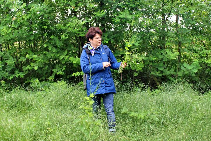 Kräuterexpertin Beate Czernohous kennt die heimische Artenvielfalt.(Foto: Naturschutzstiftung Grafschaft Bentheim)