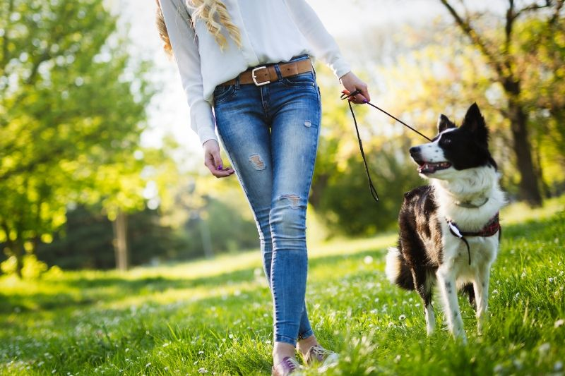 4 Easy and Fun Ways to Exercise with Your Dog